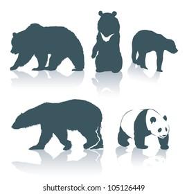 Bear species - vector illustration