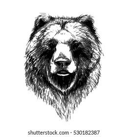 bear vector