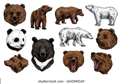 Bear vector sketch with heads of predatory animal. Wild grizzly and panda, brown, polar and Asian black bears with angry muzzles, open mouth and sharp teeth. Zoo mascot and wildlife themes
