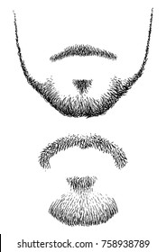 Beard illustration, drawing, engraving, ink, line art, vector
