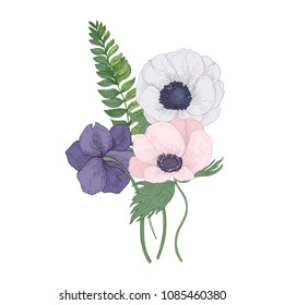 Beautiful Anemone blossoming flowers and leaves isolated on white background. Detailed drawing of gorgeous trendy flowering plant used in floristry. Floral vector illustration in vintage style.