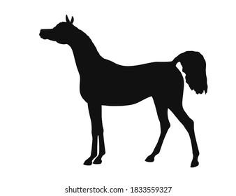 Beautiful arabian horse, standing still, side view, vector silhouette
