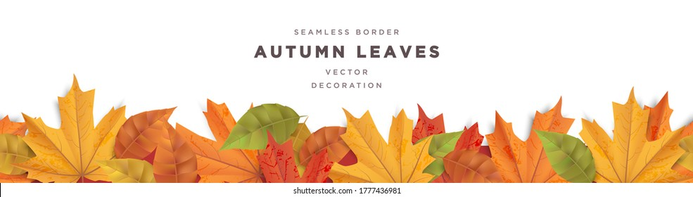 Beautiful autumn leaves decorative border frame vector template