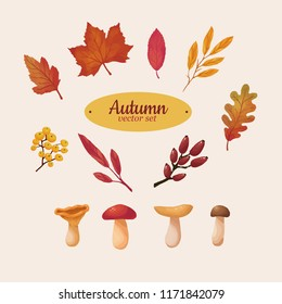 Beautiful autumn leaves and mushrooms vector set