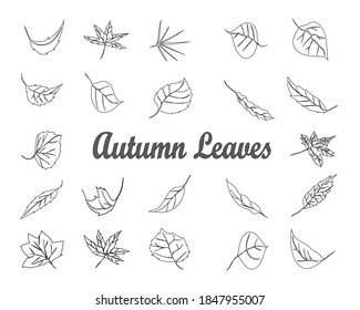 beautiful autumn leaves to use as images for posters, books and more