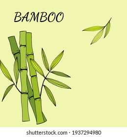 Beautiful background with bamboo stem and leaves. Set of bamboo tree leaves. Drawing of parts of bamboo and sections of branches and leaves isolated on a green  background.