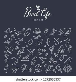 Beautiful background with birds icons. Flat birds icon set. Thin line style for icons.Vector flat simple minimalistic bird logo. Birds icon, animal sign, symbol isolated on white background.
