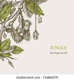 Beautiful background. The monkey hanging on the branch of a tropical tree. Vintage style. Vector illustration.