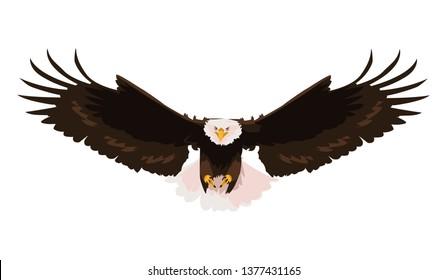 beautiful bald eagle flying