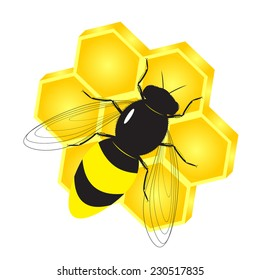 A beautiful bee and honeycombs with honey in the form of a flower