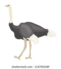 A beautiful bird with beak and long thin legs depicting  ostrich