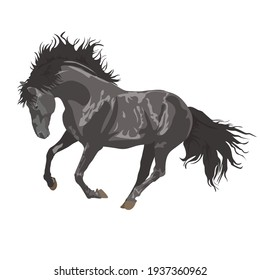 beautiful black horse. gray horse on a white background. Horseback riding. farm. poster card with horses