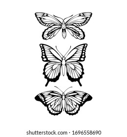 Beautiful black outline vector butterfly illustration isolated on a white background for graphic design, textile production, typography, banner, postcard, coloring book