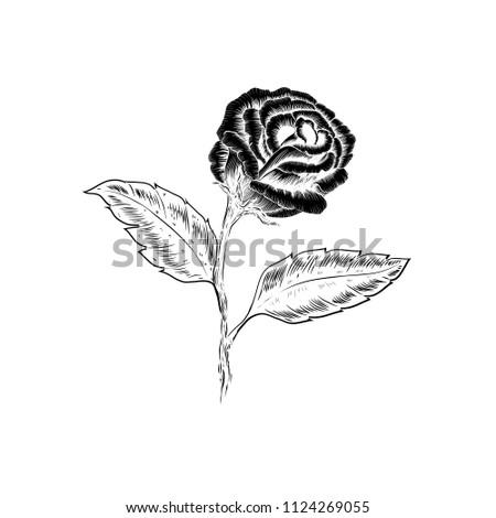 Beautiful Black White Rose Flower Leaves Stock Vector Royalty Free