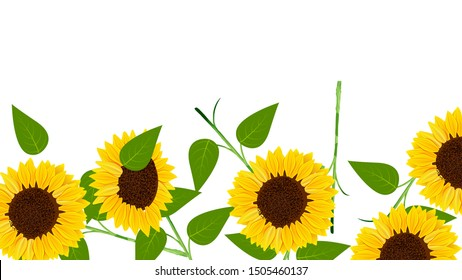 beautiful blossom sunflowers in the bottom border background