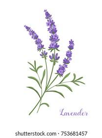 Beautiful boquet of violet lavender flowers.
