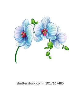 Beautiful branch with orchid flowers on a white background. Tropical plants from the Hawaiian Islands. Vector illustration. Cartoon style.