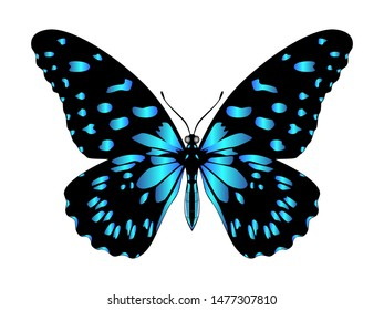 Beautiful bright blue butterfly icon. Vector illustration isolated on white background.