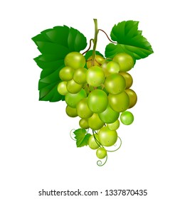 Beautiful bunch of grapes on a white background. isolate