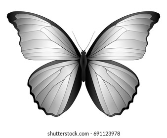 3d butterfly stock images royalty free images vectors