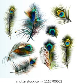 Beautiful collection of vector realistic peacock feathers