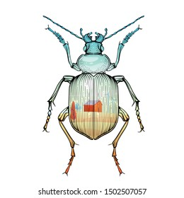 Beautiful color beetle with landscape print on a white background in linear style. Hand-drawn.
