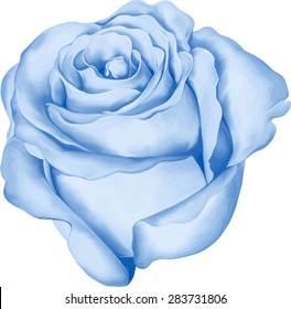 Beautiful colorful blue Rose Flower isolated on white background. Vector illustration