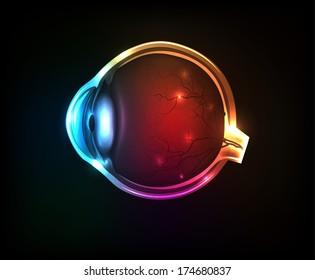 Beautiful colorful human eye on a dark background.