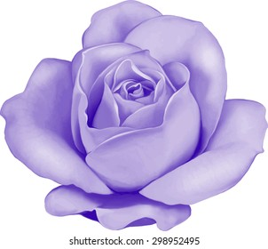 Beautiful colorful light purple Rose Flower isolated on white background. Vector illustration.