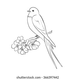 Beautiful and cute swallow sit on a flowering branch. Stylish design element. Vector black and white illustration. Hand-drawn contour lines.