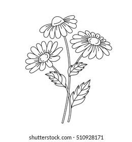 Beautiful daisies isolated on a white background. Vector illustration.