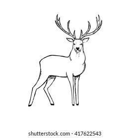 Beautiful deer. Outline vector illustration.