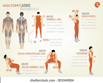 beautiful design info graphic of arm workout(biceps and triceps)consist of biceps dumbbell curl,biceps seated concentration curl,biceps incline dumbbell curl,triceps french press and triceps push down