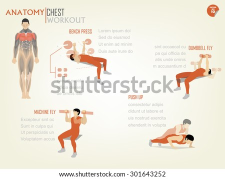 Beautiful Design Infographic Chest Workout Consist Stock Vector ...