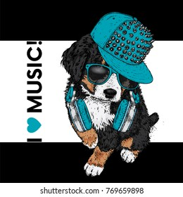 A beautiful dog in a cap and headphones. The Bernese zenenhund. Purebred puppy in clothes and accessories. Vector illustration for a postcard or poster, print on clothes, covers, covers or bags.