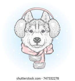 Beautiful dog in winter headphones and scarf. Vector illustration. Purebred puppy in clothes and accessories. Husky or wolf. New Year's and Christmas.