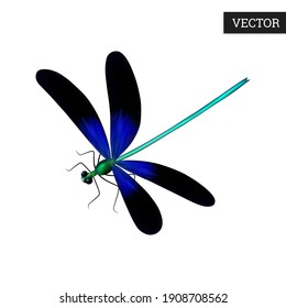 Beautiful dragonfly isolated on a white background. A unique flying insect (Odonata) in a realistic style. Vector illustration 3D. Wild predator icon. Design element. Stock.