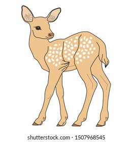 Beautiful drawing of a young deer. Hand drawn fawn. Vector illustration on a white background.