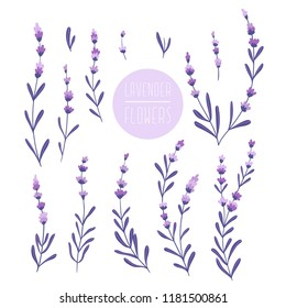 Beautiful and elegant lavender buds isolated on the white background. Set of lavender flowers. Lavander design elements.