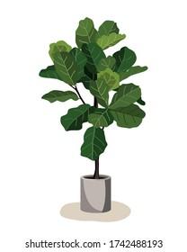 Beautiful fiddle leaf tree in ceramic pot on white background. Ficus Lyrata vector illustration. Stylish houseplant design element for modern interior room.