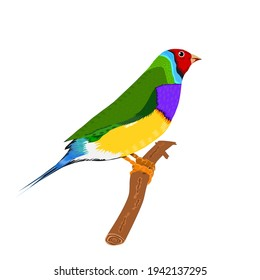 Beautiful finches Green, red face, purple breast Finch Logo, Colorful vector full body finch bird in white background.