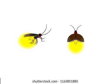 Beautiful firefly spread wings and light at the end of the body. design Insect beetle firefly. Vector set of simple cartoon drawings with different angles and elements.