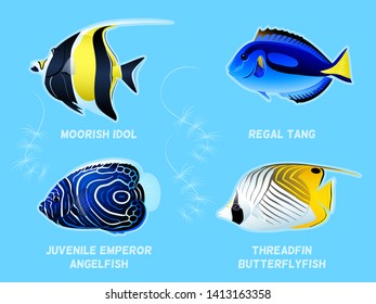 Beautiful fishes - Moorish Idol, Regal Tang, Emperor Angelfish, Threadfin Butterflyfish