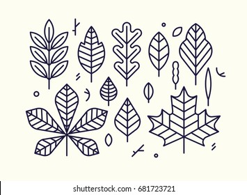 Beautiful flat line design autumn leaves. Clean and minimalistic vector differently shaped linear leaves. Maple, oak, birch, chestnut, etc.