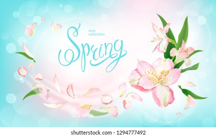 Beautiful floral background with blooming flowers of light pink Alstroemeria. Inscription Spring on pastel blue background. Warm breeze carries tender petals and green leaves. Vector illustration.