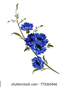 Beautiful flower cornflower