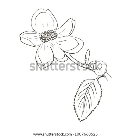 Beautiful flower draw stock vector royalty free 1007668525 beautiful flower draw mightylinksfo