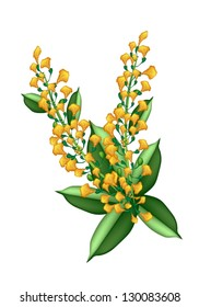 Beautiful Flower, An Illustration Yellow Color of Padauk Flower or Papilionoideae Flower Isolated on White Background