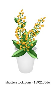 Beautiful Flower, An Illustration Yellow Color of Padauk Flower or Papilionoideae Flower in Flowerpot for Garden Decoration.