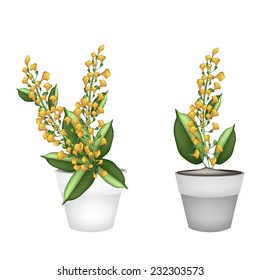 Beautiful Flower, Illustration Yellow Color of Padauk Flower or Papilionoideae Flower in Terracotta Pot for Garden Decoration.